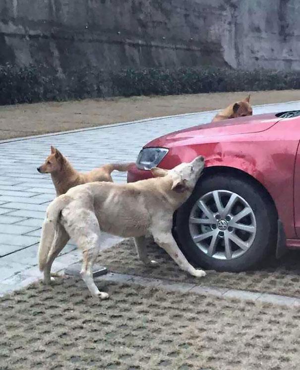 venganza-perro-callejero (1)