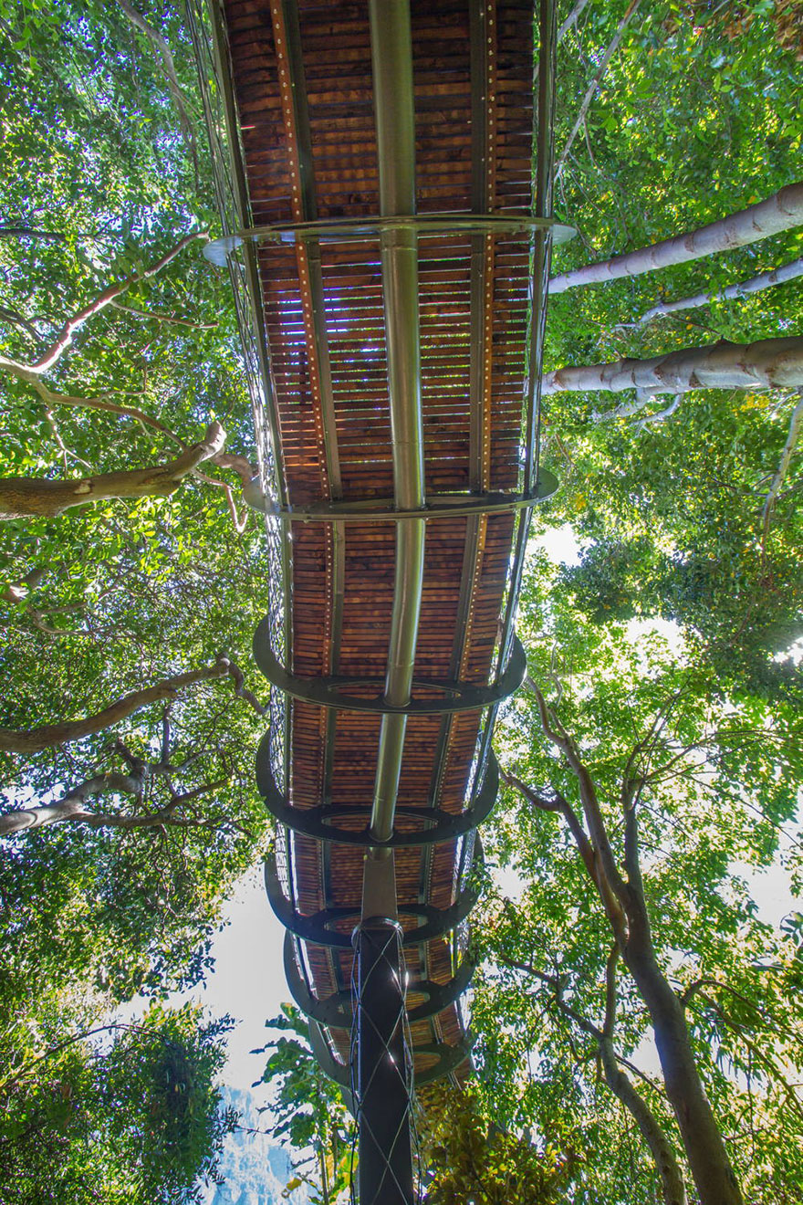 tree-canopy-walkway-path-kirstenbosch-national-botanical-garden-4