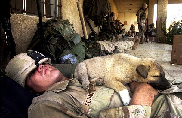 Tired Soldier And A Puppy