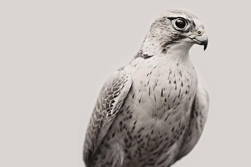 animal-wildlife-photography-troy-moth-vancouver-island-3