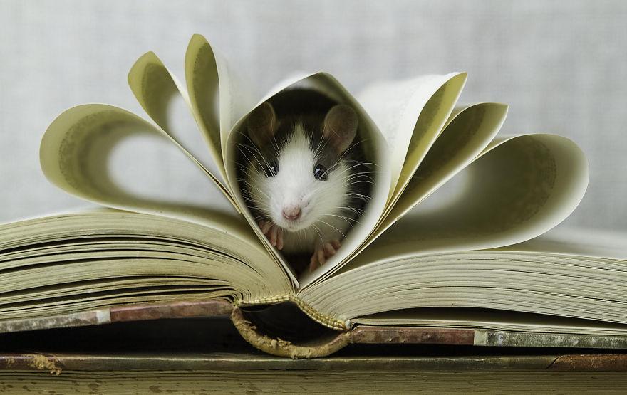 202 adorable rat pics