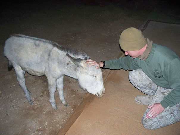 When I Was In Iraq, We Had A Pet Donkey