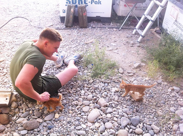 Found These Kittens In Afghanistan