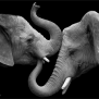 Elephant Love Photographer Shows The Emotional Side Of
