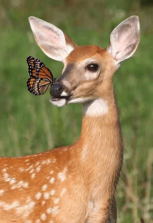 Bambi With Butterfly Bored Panda