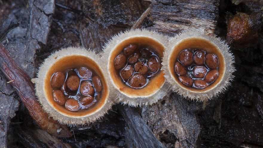 mushroom-photography-steve-axford-23