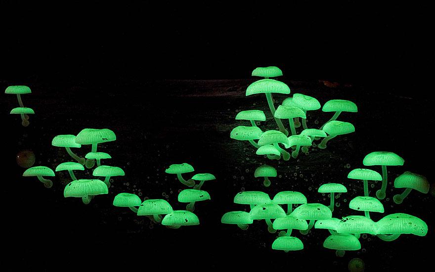 mushroom-photography-steve-axford-6
