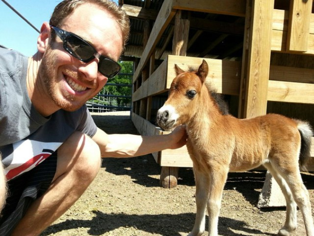 This Is A Tiny Horse