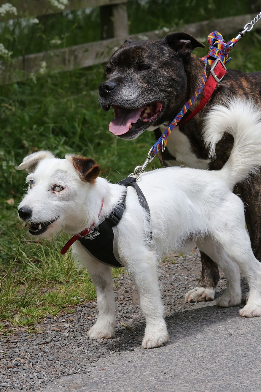 blind-dog-guide-best-friends-abandoned-rescued-stray-aid-shelter-glenn-buzz-2