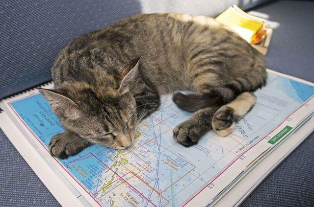 couple-sells-everything-travels-world-cat-matt-jessica-johnson-25