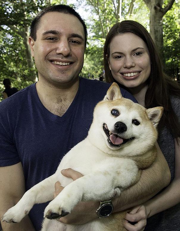 happiest-smiling-dog-shiba-inu-cinnamon-7