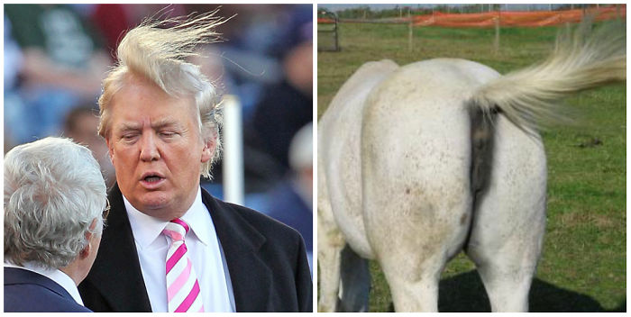 Image result for images of donald trumps hair
