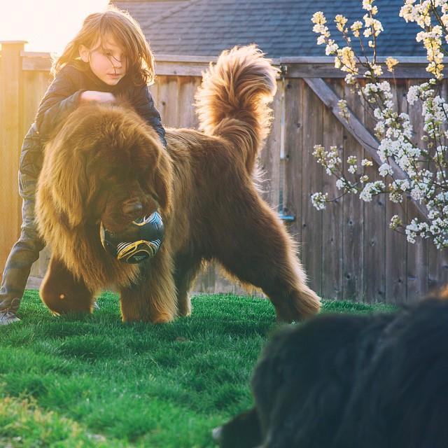mom-photographs-son-dogs-horse-friendship-stasha-becker-julian-124