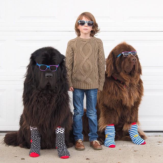 mom-photographs-son-dogs-horse-friendship-stasha-becker-julian-151