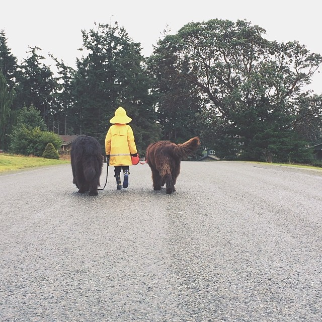 mom-photographs-son-dogs-horse-friendship-stasha-becker-julian-70