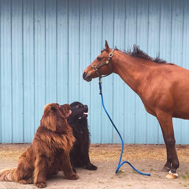 mom-photographs-son-dogs-horse-friendship-stasha-becker-julian-82