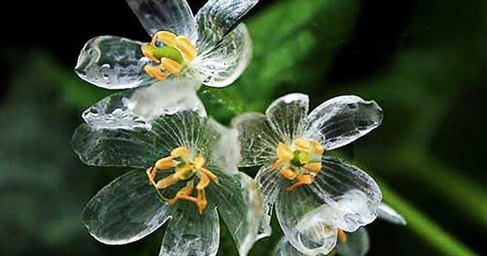 skeleton flowers become transparent