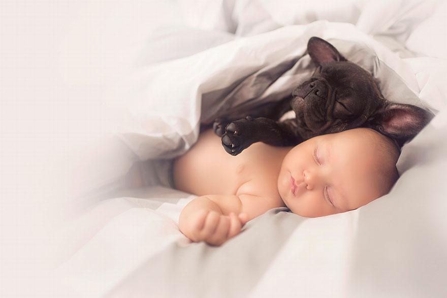 baby-dog-friendship-french-bulldog-ivette-ivens-2