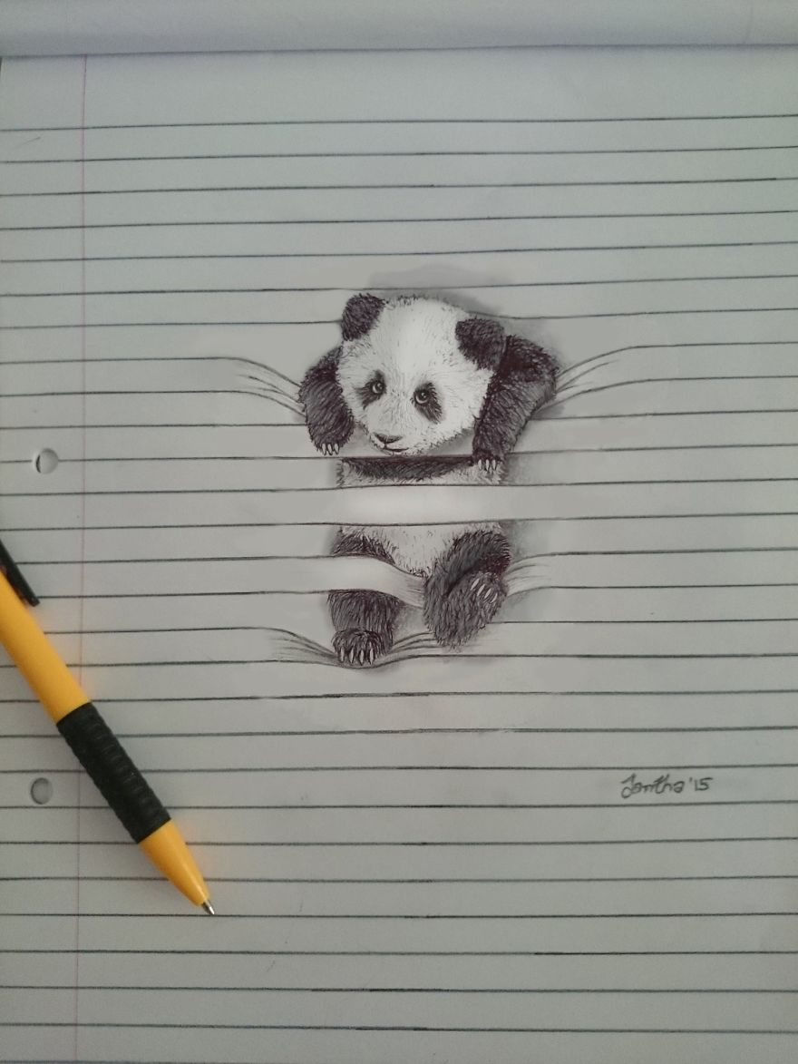 Cute Animal Pictures To Draw : animal, pictures, Animals, Don't, Between, Lines, Bored, Panda