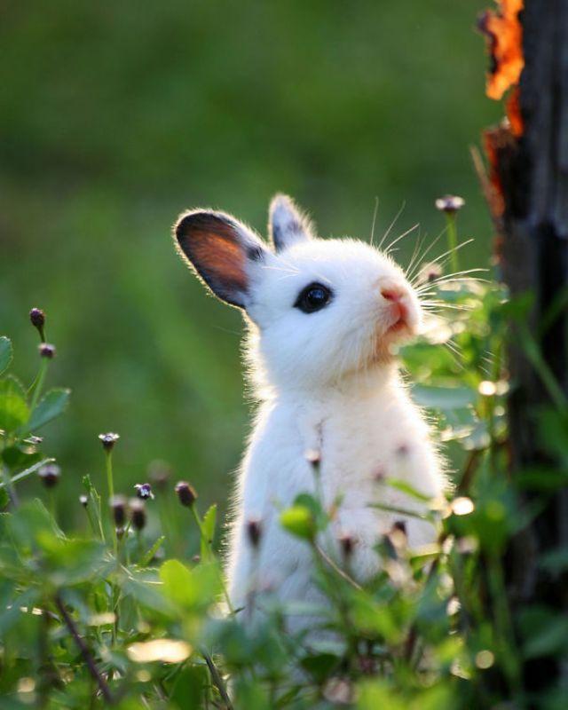 Baby Bunny In The Woods