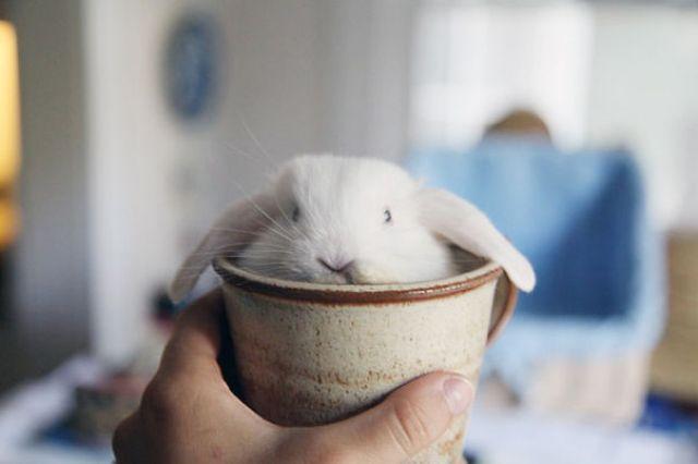 Cute Bunny In Cup
