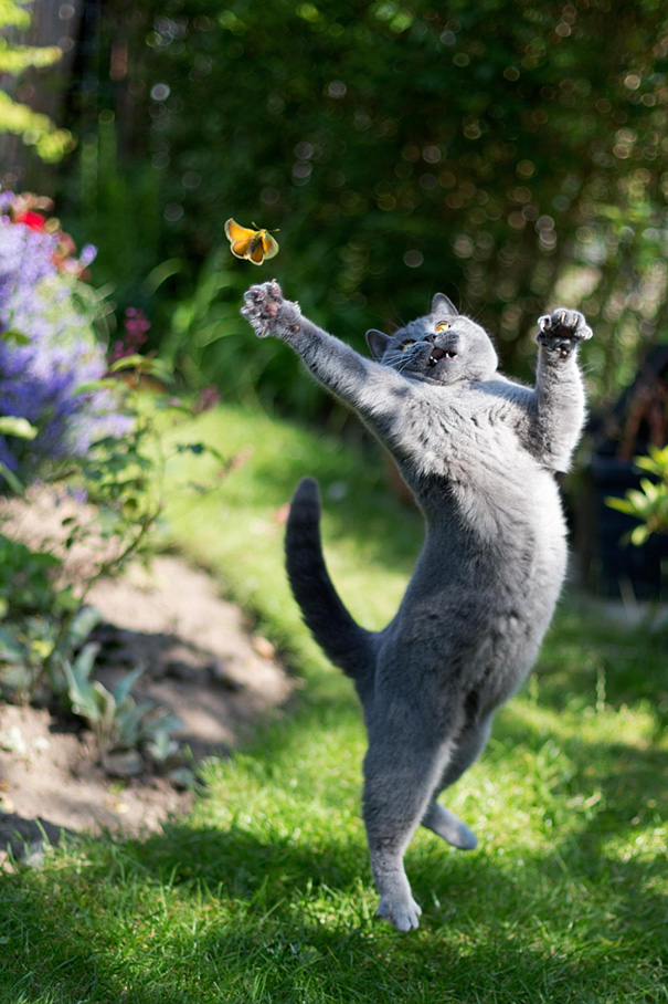 My Cat Trying To Catch A Butterfly