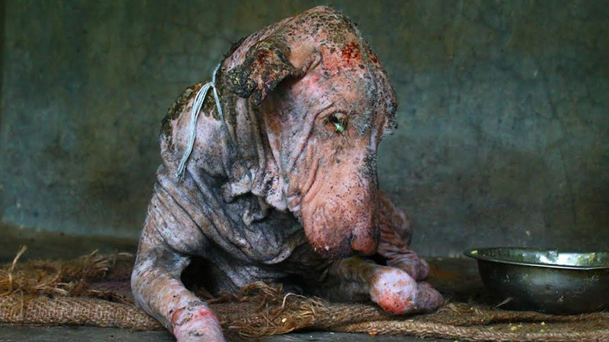 mange-sick-dog-rescue-animal-aid-unlimited-1
