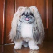 derpy dog fabulous