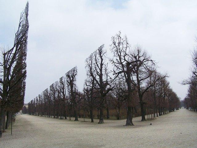 Schonbrunn Parkı