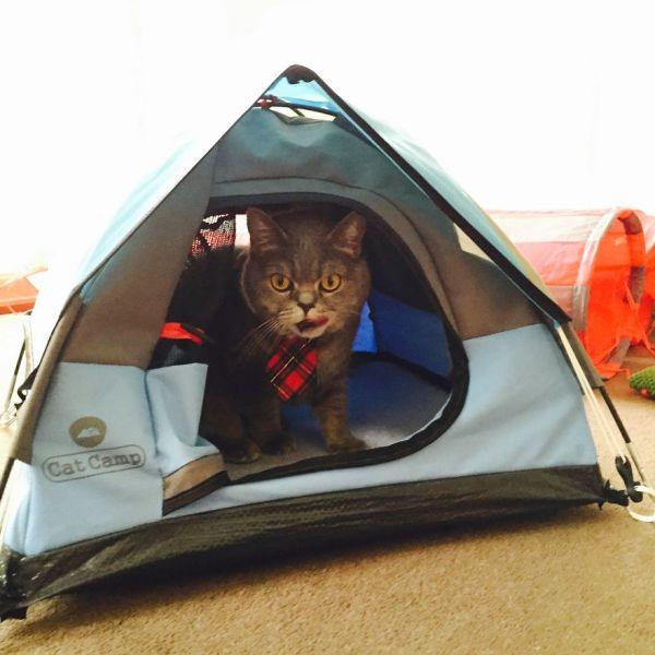 Tiny Tents Cats Bored Panda