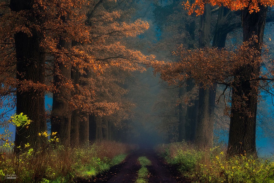 Fall Leaves Hd Wallpapers 1080p Dream Like Autumn Forests By Czech Photographer Janek