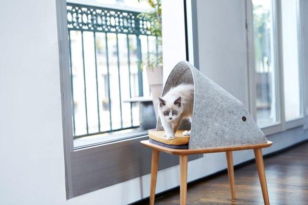 cat-cocoon-meyou-sanchez- gadenne-8