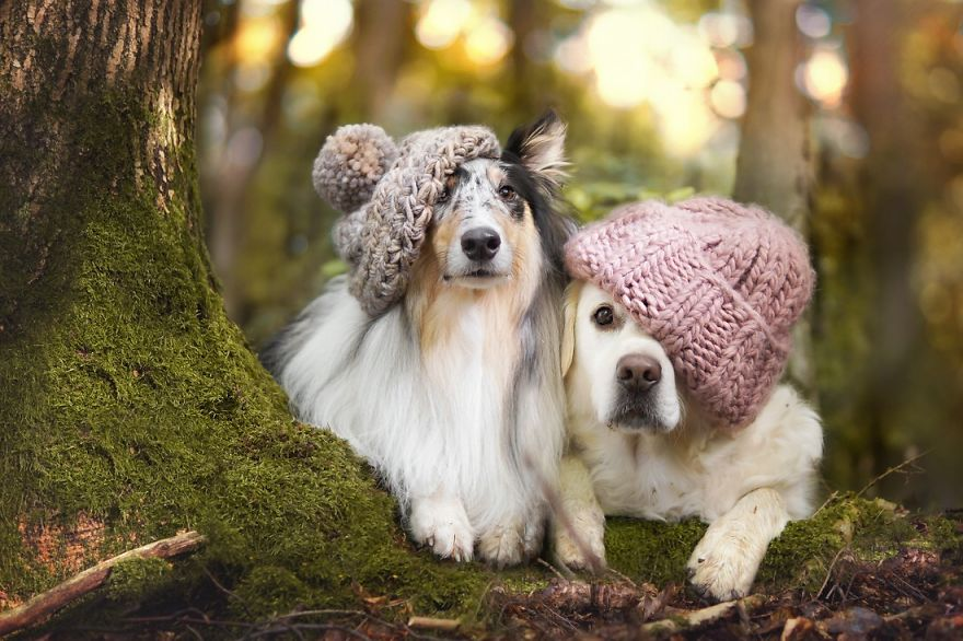3d Cute Dog Wallpaper Autumn Dog Me And My Golden Retriever Love This Time Of