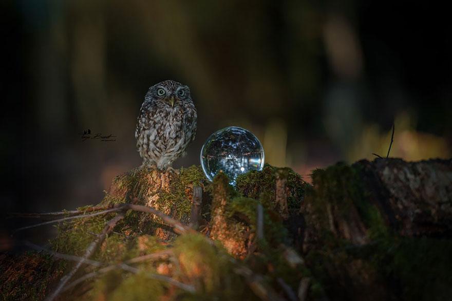 owl-and-mushrooms-tanja-brandt-10