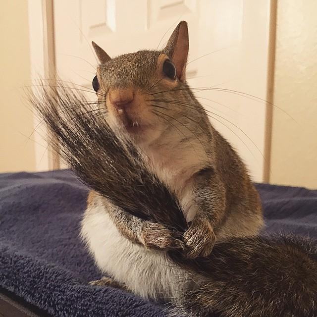 photogenic-rescue-squirrel-jill-47