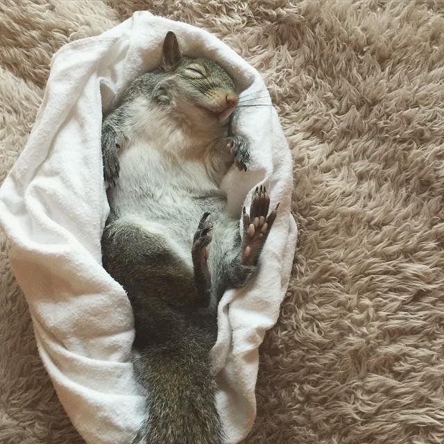 photogenic-rescue-squirrel-jill-76