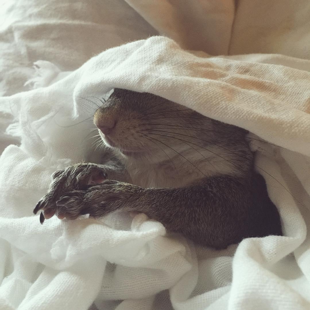 photogenic-rescue-squirrel-jill-81