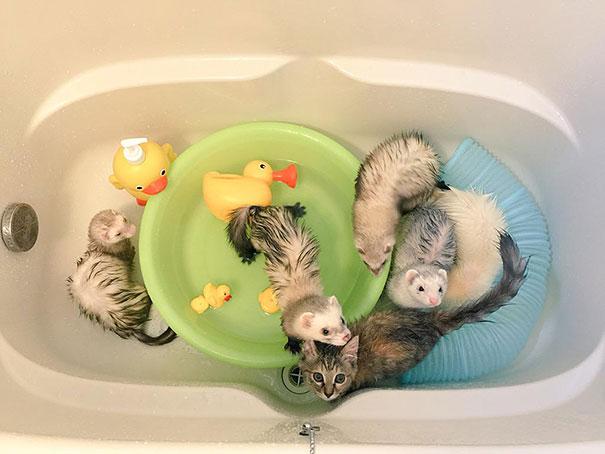 rescue-gattino-Komari-Ferret-fratelli-44