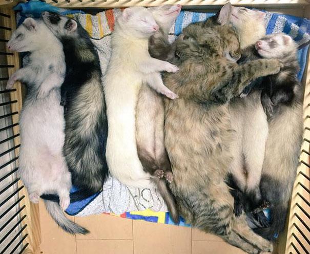 rescue-gattino-Komari-Ferret-fratelli-64