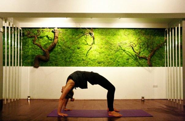 Moss Wall In Yoga Studio