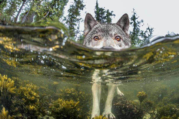 Algo a pescado, Columbia Británica Coast, Canadá