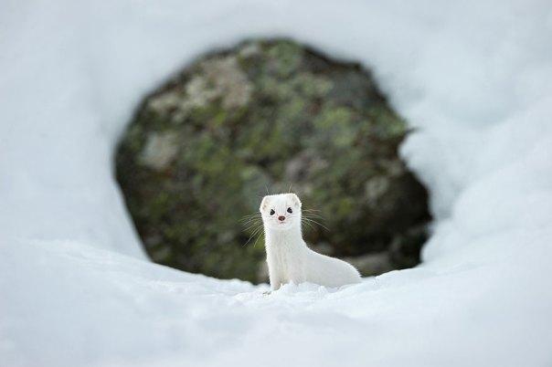 Blanco del invierno, el Parque Nacional del Gran Paradiso, Italia