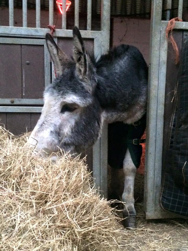 rescued-donkey-smiling-fall-river-flood-mike-ireland-65