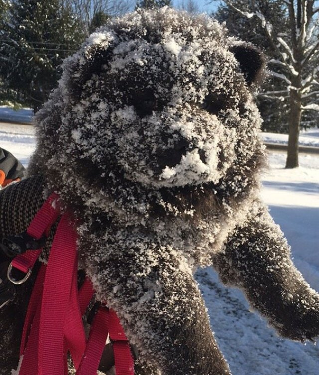 My New Chow Chow Puppy Experienced Winter Today
