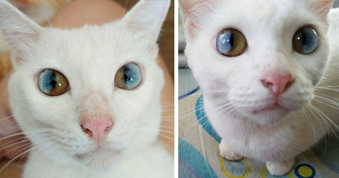 this cat s eyes