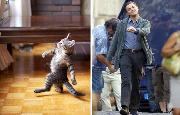 Strutting Kitty Looks Like Leo