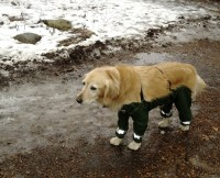 Riddle Finally Solved: Dogs Should Wear Pants Like This ...