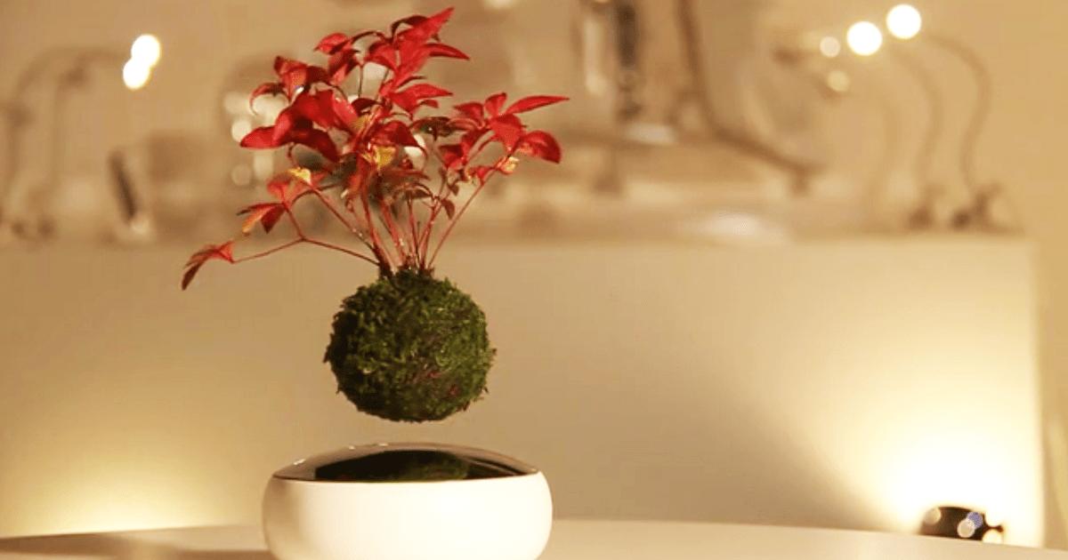 Air Floating Bonsai
