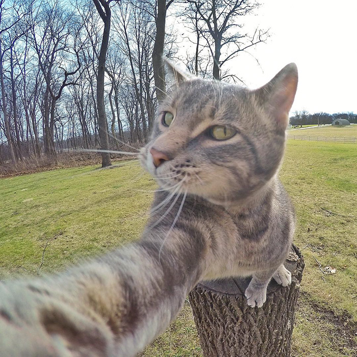 manny cat takes selfies dogs gopro 11 - It Was An Ordinary Day When His Cat Started To Take Selfies