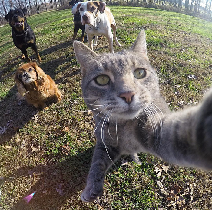 viral-selfie-cat